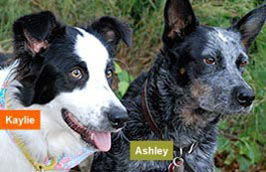Becky's dogs, Kaylie and Ashley